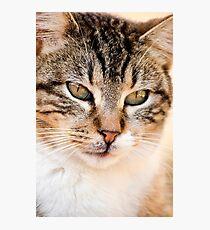 domestic feline Photographic Print
