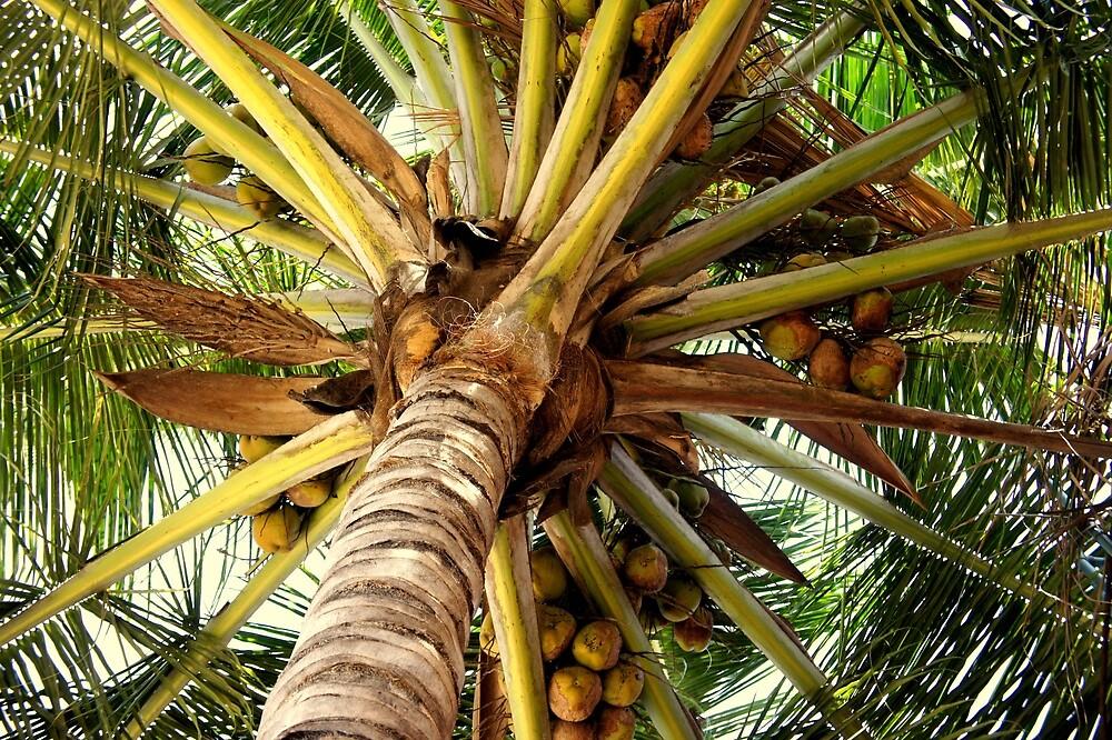 COCONUT TREE by Manikandan