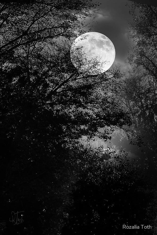 Full Moon by Rozalia Toth