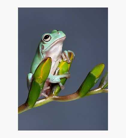 Cute young tree frog Photographic Print