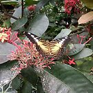 Butterflies at the Pacific Science Center in Seattle by rferrisx