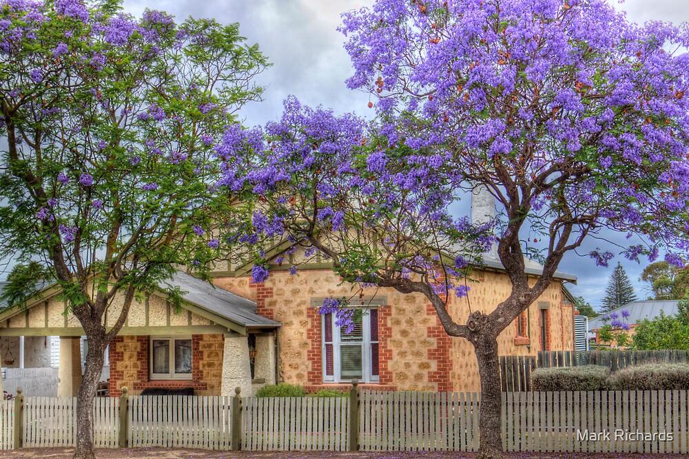 Jacarandas - McHenry Street, Murray Bridge, South Australia by Mark Richards