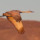 Morning Flight by kurtbowmanphoto