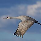 Flight in The Clouds by kurtbowmanphoto