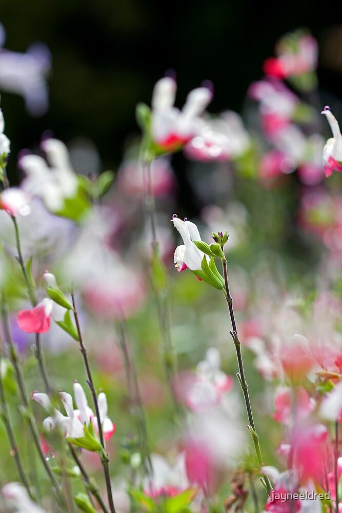Floral Choir by jayneeldred