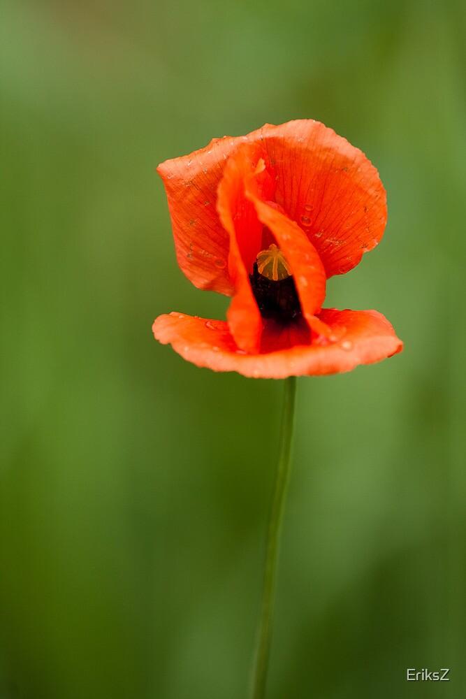 poppy by EriksZ