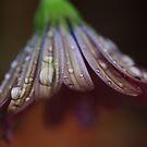 Tears of Joy by Keith G. Hawley