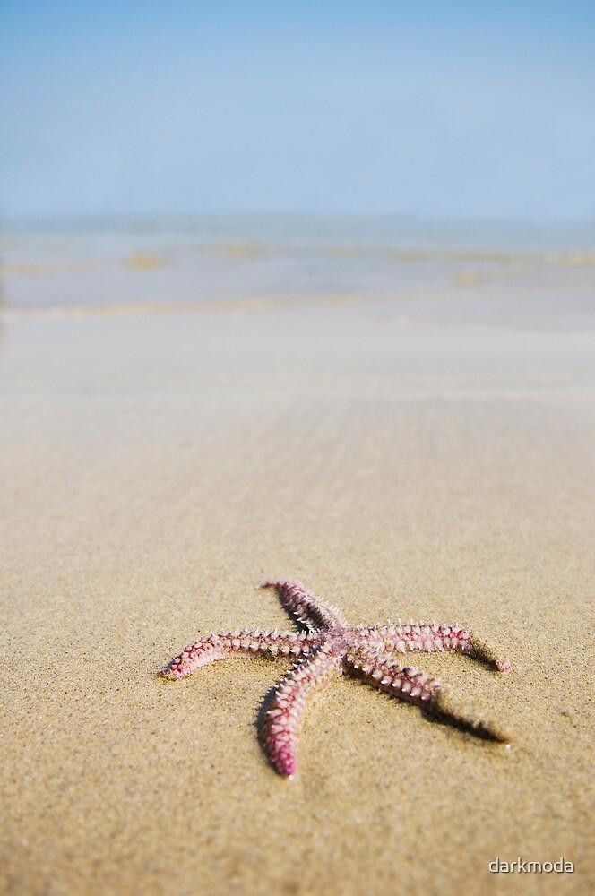 Starfish by darkmoda