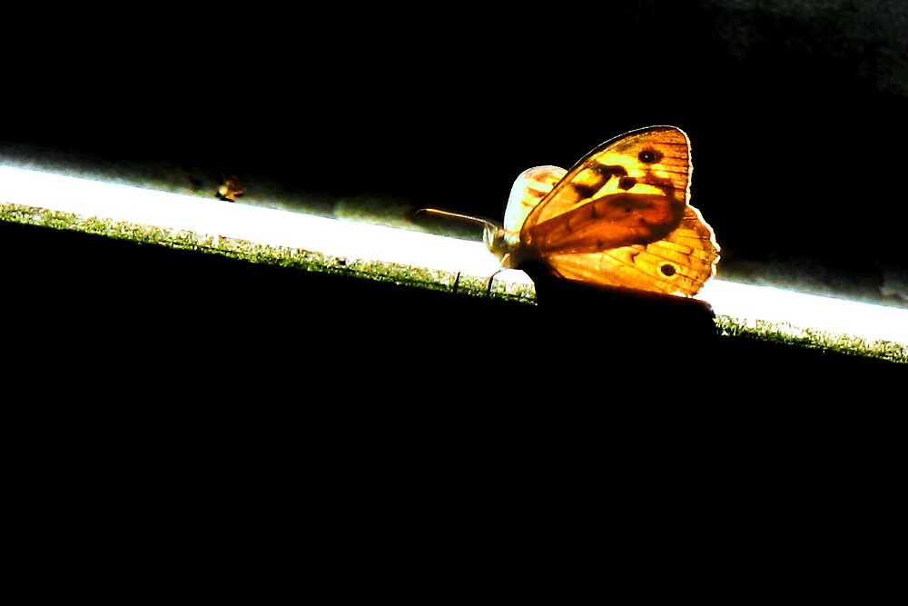 light butterfly by Elyse Clarence