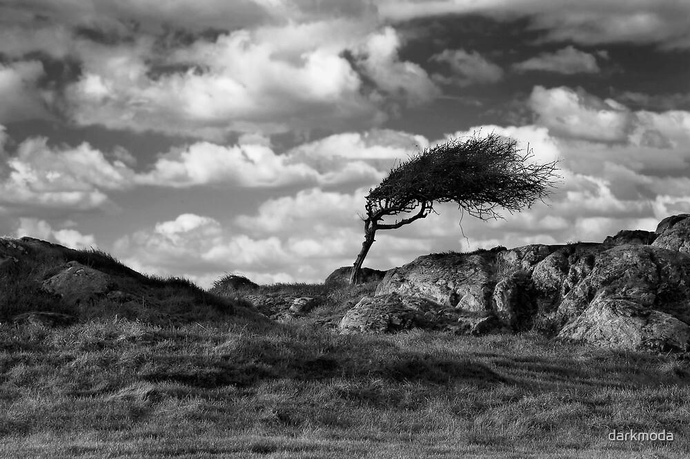 Windswept by darkmoda