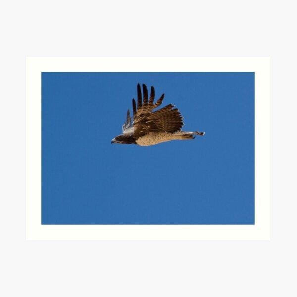 Martial Eagle Flight Art Print