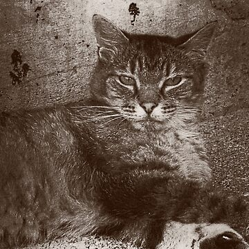 Tabby Cat Relaxing, Sepia, Grunge by PhotosByTrish