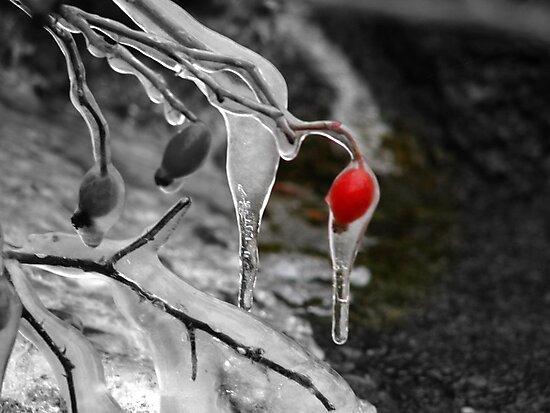 Living Color by Brenda Dahl