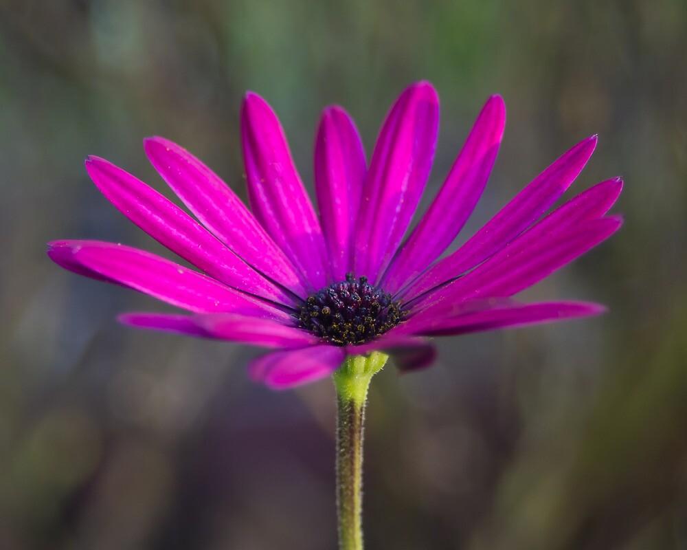 One Lonely Flower by Tom Gotzy