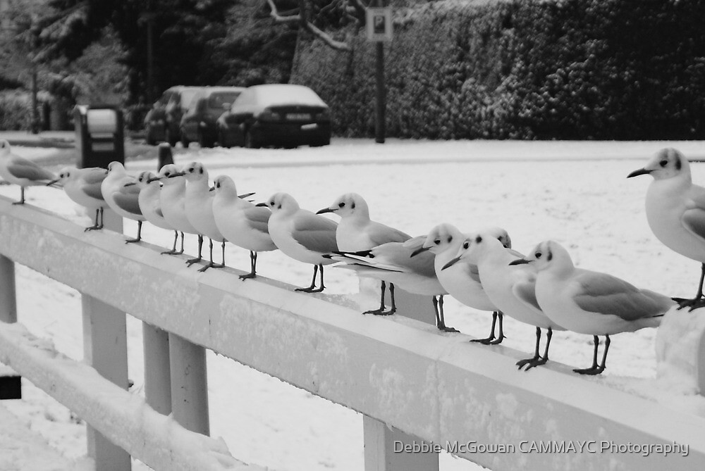 Its to cold to Fly! by Debbie McGowan CAMMAYC Photography