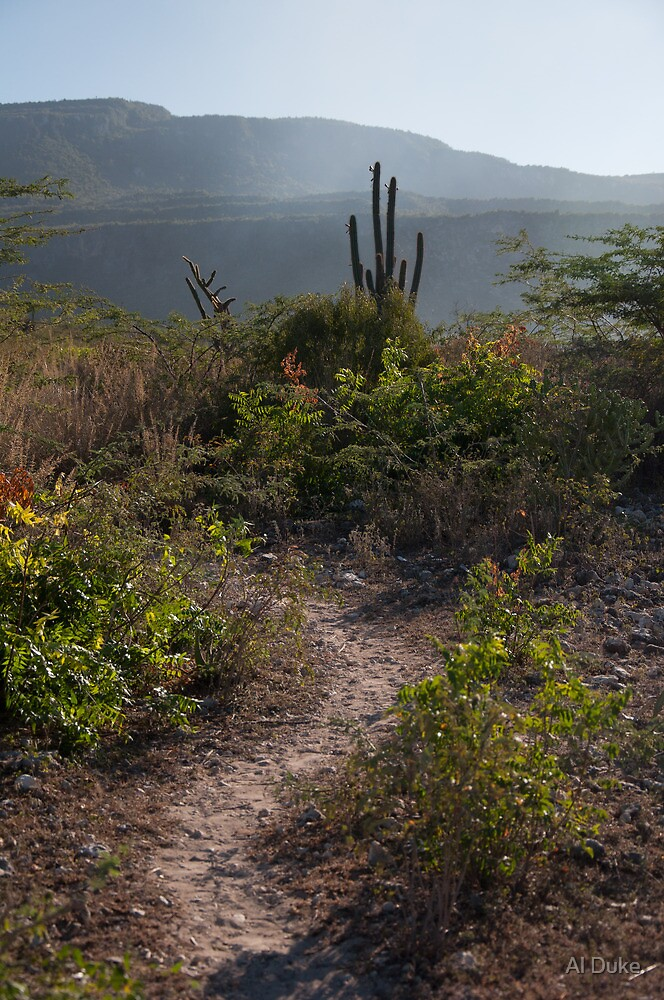 Cactus Trail by Al Duke