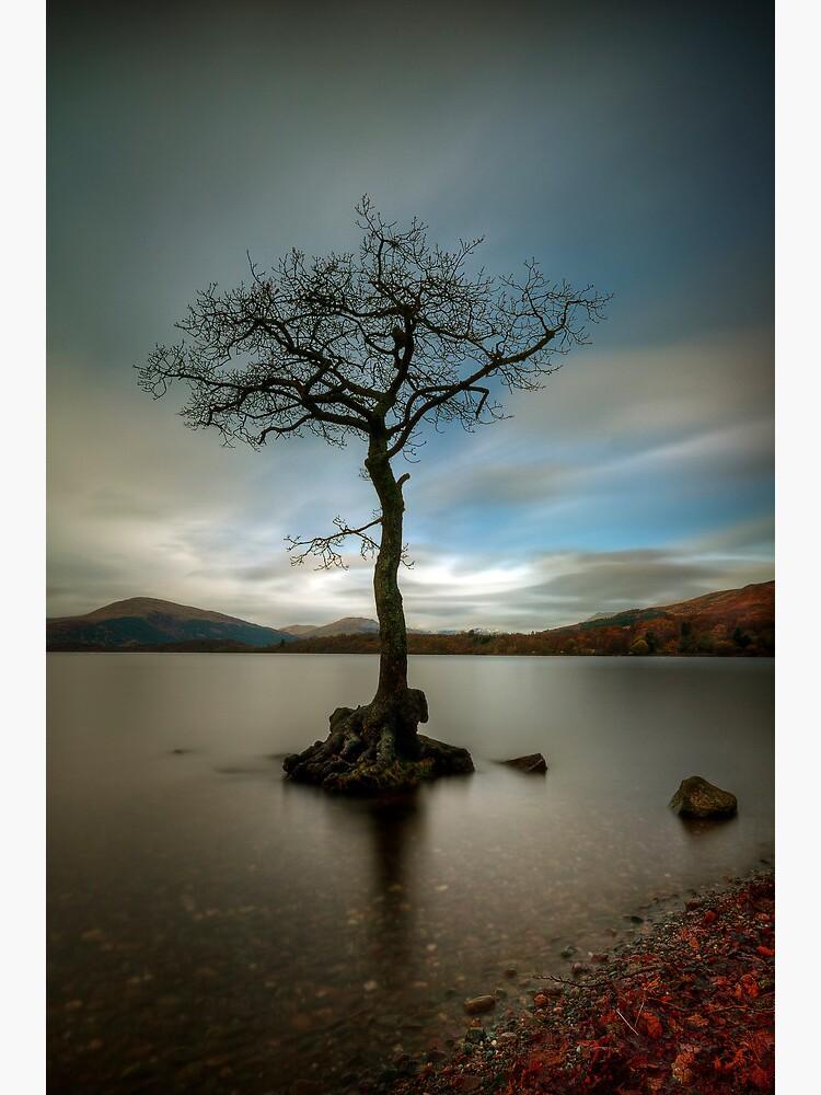 Milarrochy Tree (1) by Shuggie