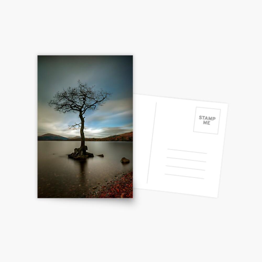Milarrochy Tree (1) Postcard