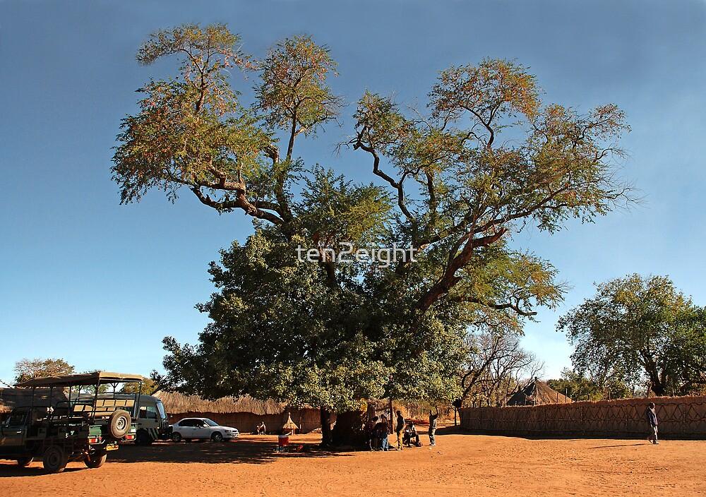 Mango Tree by ten2eight