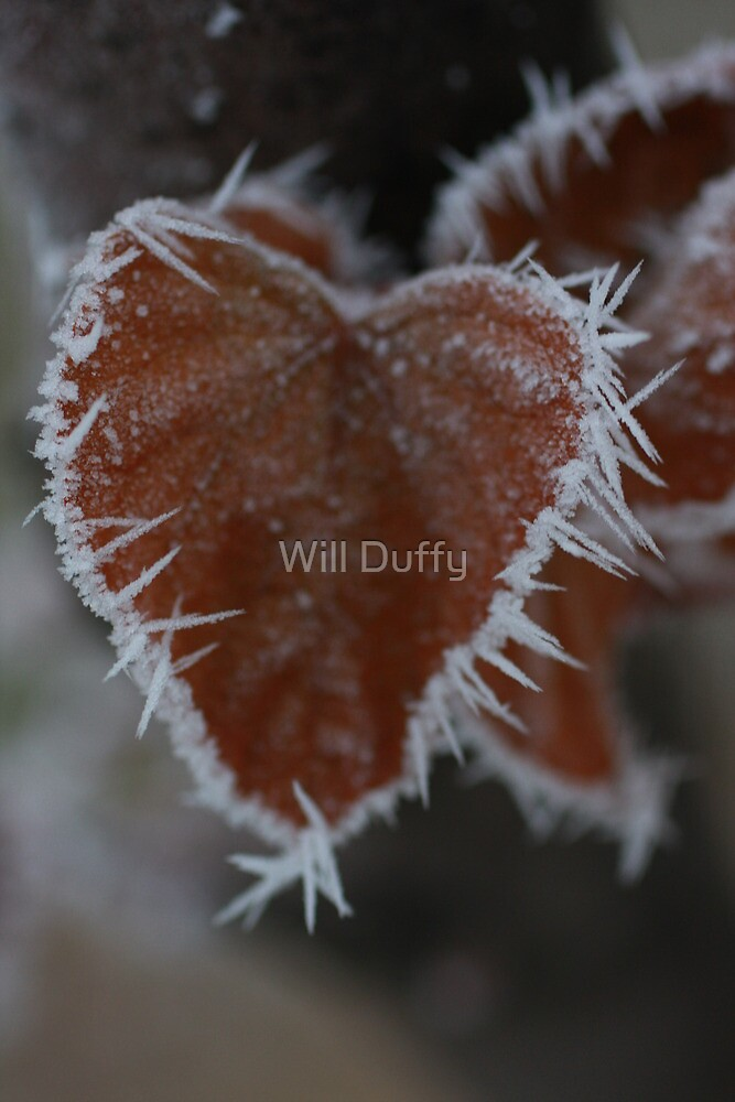 Cold Heart by Will Duffy