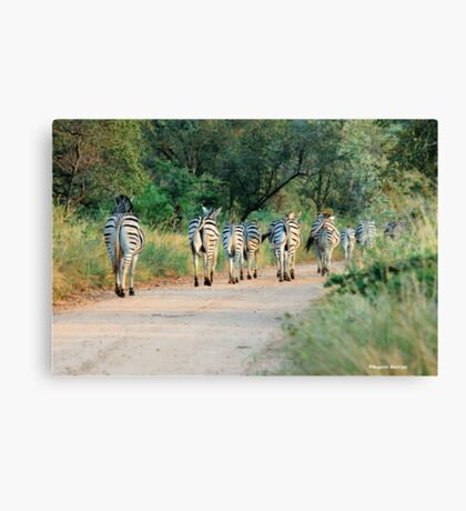 THIS IS THE WAY! - BURCHILLS ZEBRA - Equus burchelli  Canvas Print