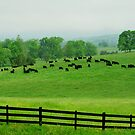 Country Farms by Purohit