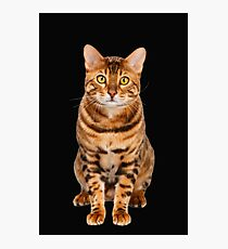 Amazing Bengal Kitten Photographic Print