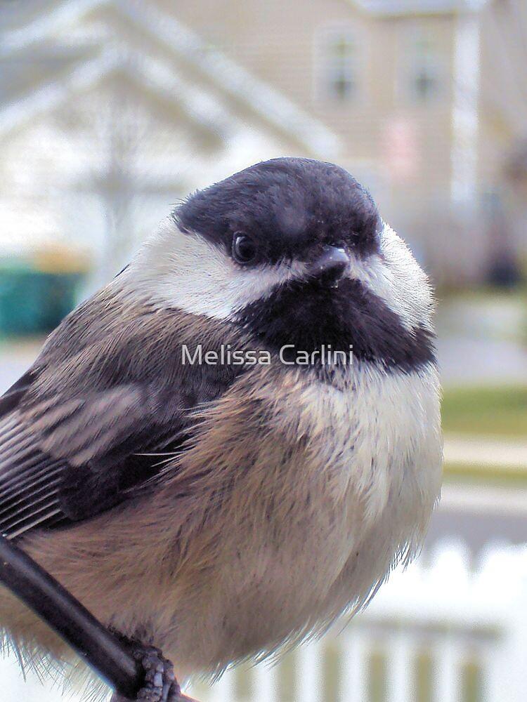 Puffy Lil Chickadee by Melissa Carlini