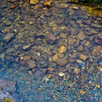 Fresh Water Pebbles by byoGuru