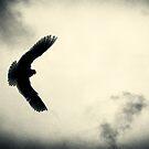 Fly Free One by Dragomir Vukovic