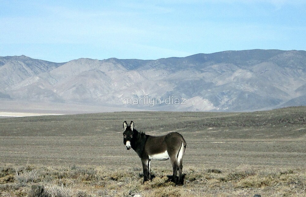 Burro Beauty by marilyn diaz