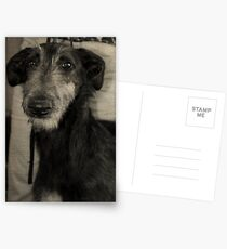 Scottish Deerhound Postcards