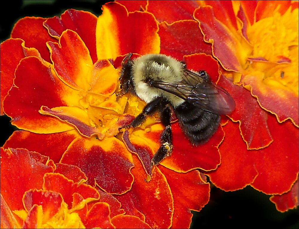 Bee M by saripin