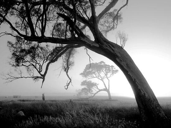 Foggy Morn by Enivea
