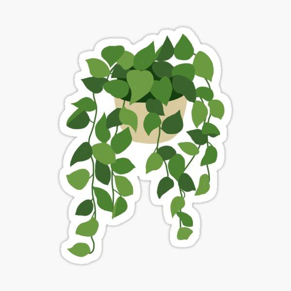 Pothos Plant Sticker