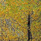 November by David  Postgate