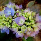 Hydrangea in December by Debbie Robbins