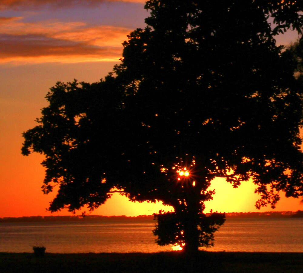 Silhouette Tree in Sunset  by mhm710