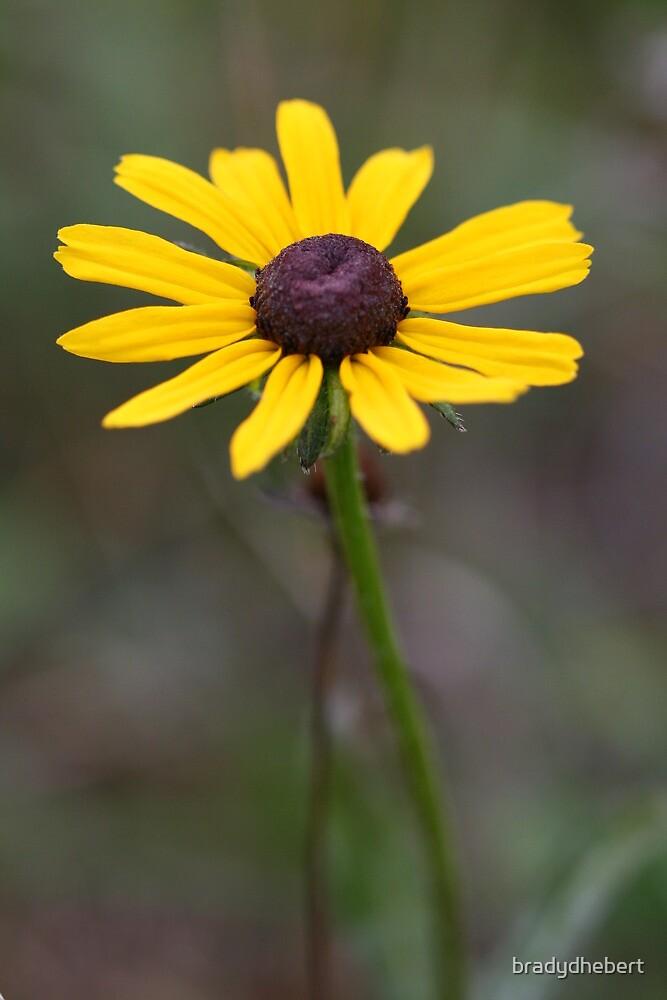 Yellow Flower by bradydhebert
