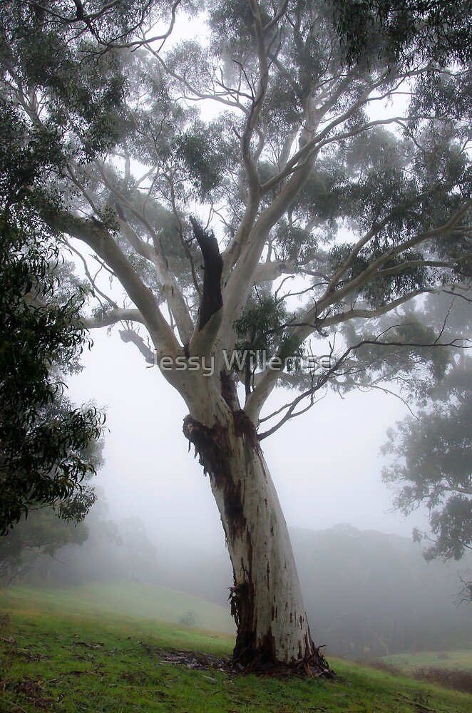 Gum tree in the mist by Jessy Willemse