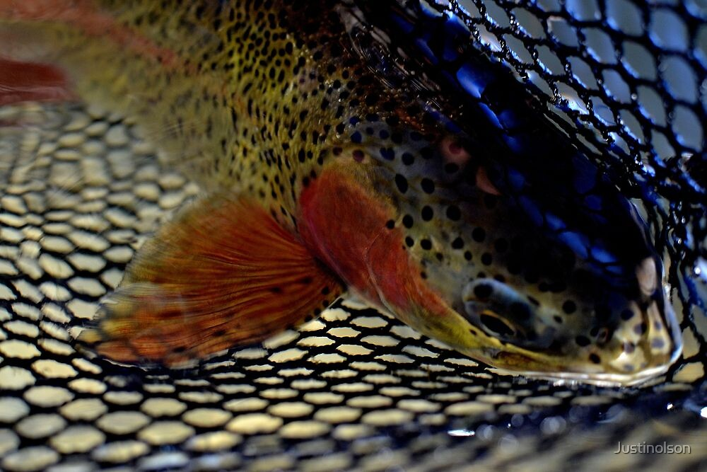 Trout by Justinolson