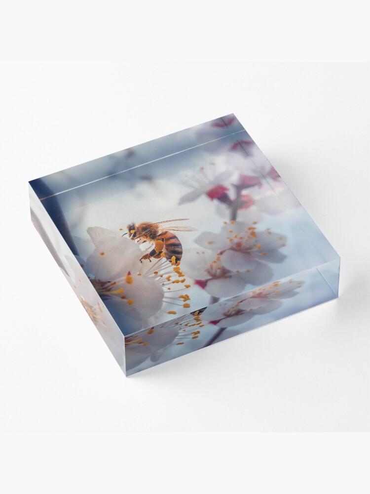 Alternate view of honey bee on apricot flowers Acrylic Block