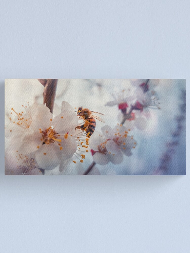 Alternate view of honey bee on apricot flowers Canvas Print