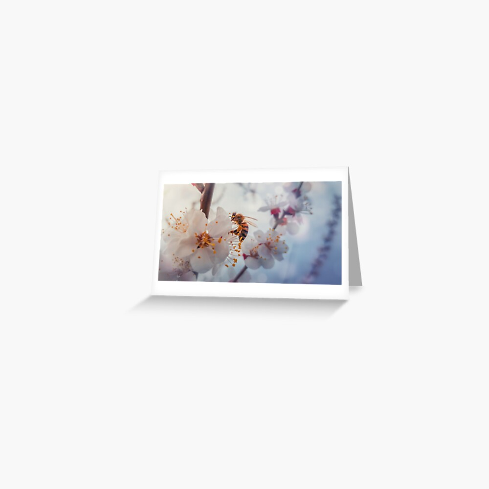 honey bee on apricot flowers Greeting Card