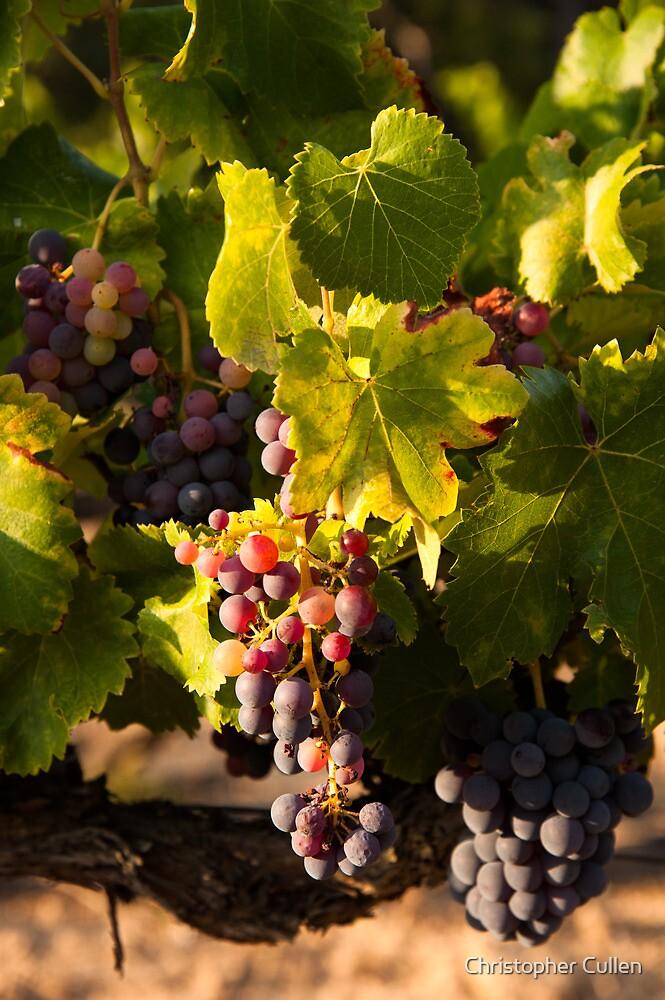 Luberon vineyard by Christopher Cullen