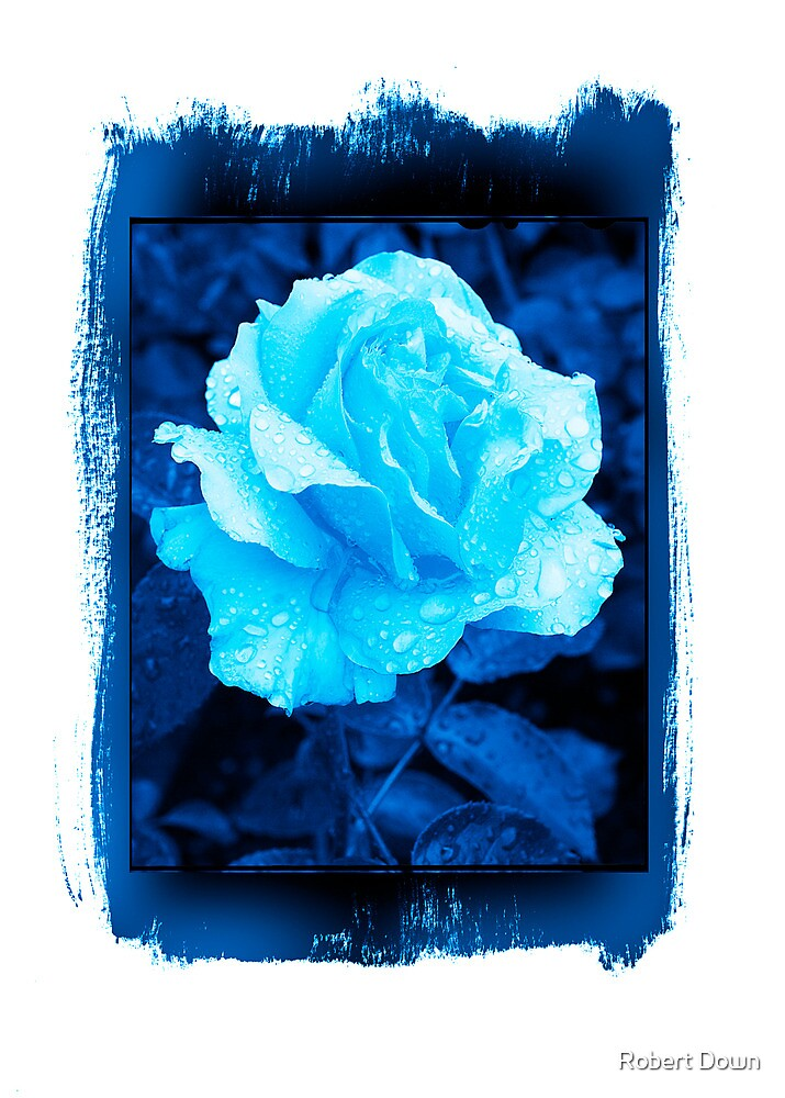 Rose in blue by Robert Down