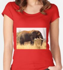 Loxodonta africana Women's Fitted Scoop T-Shirt