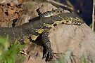 Nile Monitor by Will Hore-Lacy