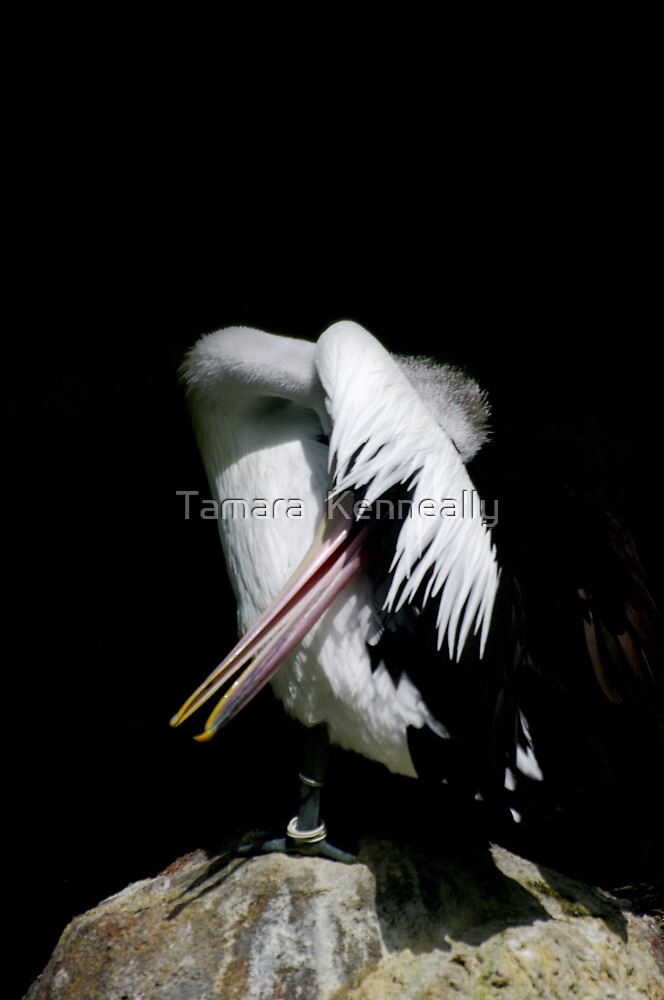 The Majestic Pelican VI by Tamara  Kenneally