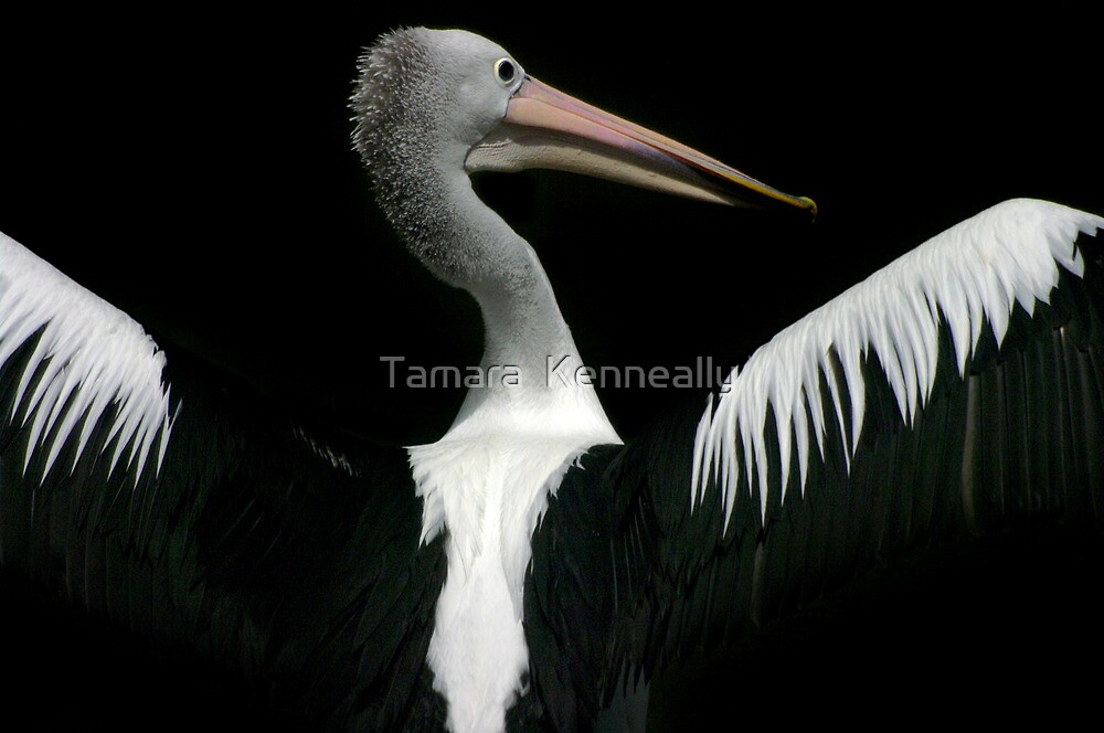 The Majestic Pelican VII by Tamara  Kenneally